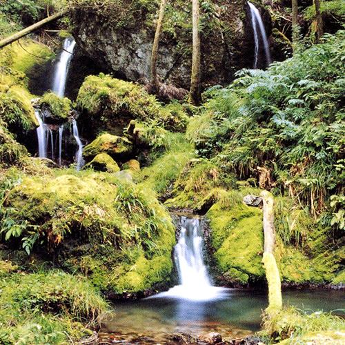 郡上八幡天然水 水の雫はこだわりの湧水仕込み!